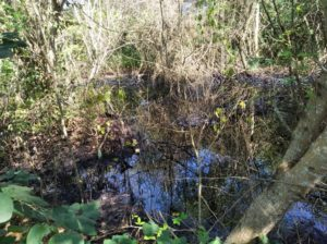 Río Neverí contaminado por hidrocarburos. Foto: Twitter